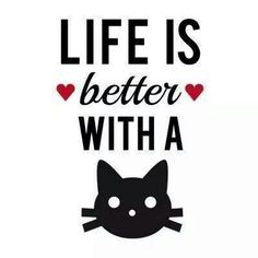 Life is better with a cat, text design, word art S by Illustree - CafePress Crazy Cat Lady, Crazy Cats, I Love Cats, Cool Cats, Cat Text, Gatos Cats, Photo Chat, Cat Quotes, Cat Sayings