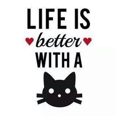 Alimentos que no debe comer tu gato | Cuidar de tu gato es facilisimo.com