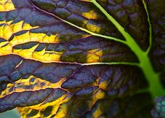 TIPS FROM THE GARDEN: COOL SEASON GROWING
