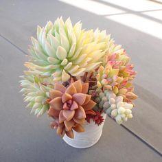 mamiiさんが投稿した画像です。他のmamiiさんの画像も見てませんか?|おすすめの観葉植物や花の名前、ガーデニング雑貨が見つかる!GreenSnap(グリーンスナップ)