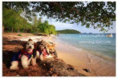 Nang Rong beach, Sat