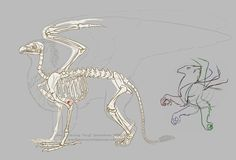 Gryphon Physiology 01 by algy on DeviantArt