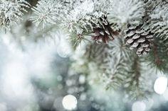 Sníh na stromech