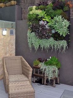 What a great choice of plants on this beautiful living wall. Place a custom succulent plant order today at https://shopsucculents.com/collections/wedding-collection/products/2-inch-assorted-succulent-collection #shopsucculents #succulents #verticalwall #livingwall #diy