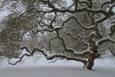Winter tree - one of the best!  Nature Photography  Winter Tree  Landscape  by JoshFriedmanPhoto, $25.00