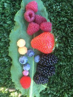 Blackberry, Strawberry, Fruit, Garden, Food, Garten, Lawn And Garden, Essen, Blackberries
