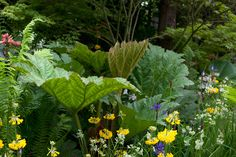 10 plants to grow in bog gardens Discover 10 of the best plants for a boggy border, including ligularia and rodgersia, recommended by the experts [. Bog Plants, Large Plants, Water Plants, Native Plants, Growing Plants, Bog Garden, Rain Garden, Shade Garden, Gutter Garden