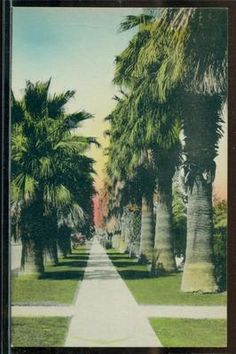 California - Lot of 7 Landscape Views - 1930's Hand Colored Postcards