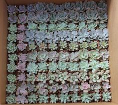 150 ROSETTE ONLY Gorgeous Succulents Perfect for Wedding and Party Favors succulent collection. $202.00, via Etsy.
