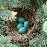 Μη βάζεις όλα τα αυγά σ' ένα καλάθι.  Μην μετράς τις κότες σου προτού βγουν από τ' αβγό.