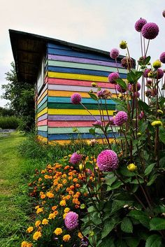 All about color with this garden shed