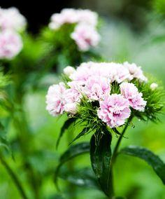 Air Plant Terrarium, Plantation, Chrysanthemum, Air Plants, Vase, Orchids, Color Pop, Instructions, Garden