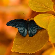 A fun image sharing community. Explore amazing art and photography and share your own visual inspiration! Shed Images, Amazing Dp, Black And White Colour, Gold Colour, Grey Yellow, Nature Paintings, Beautiful Butterflies, Love Is Sweet, Color Photography