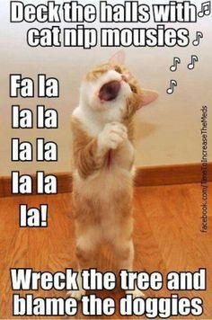 Meet Nutmeg The Cat, the old cat: The oldest living cat in the World Fun Claw – Lustige Katzen, lustige Hunde, lustige Tiere: Lustige Bilder von Katzen – 17 Bilder Funny Animal Jokes, Funny Cat Memes, Cute Funny Animals, Cute Baby Animals, Funny Dogs, Cute Cats, Funny Humor, Memes Humor, Cats Humor