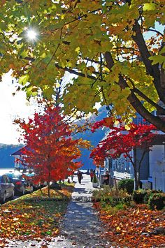"""""""Autumn in Cold Spring"""""""