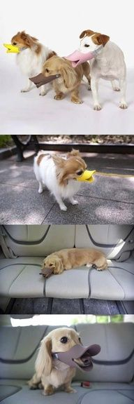 Different Solutions.. my dogs don't need this.