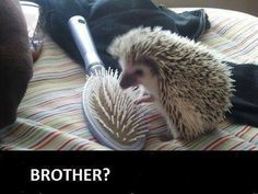 16 Reasons Hedgehogs Are Better Than Politicians - #Funny #Pic - Best Funny Meme, funny pics, New Funny Pic