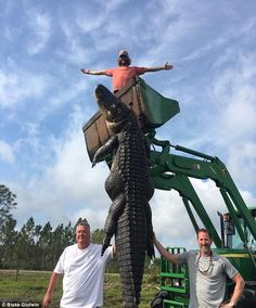 Hunters catch and kill 15ft, 800lb alligator that was eating cattle