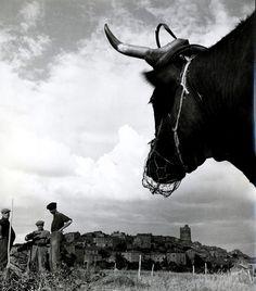 Robert Doisneau • Authezat / Auvergne • 1951