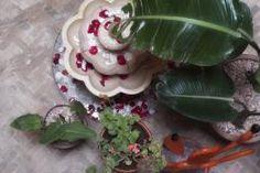 Tout nouveau venu en ville, le Riad Orange Cannelle ouvert en avril 2012 propose 9 chambres confortables et joliment décorées. Une nouvelle adresse à petit prix et toute neuve ! Riad Essaouira, Le Riad, Avril, Orange, Plants, Snug Room, Cinnamon, Open Set, Bedrooms
