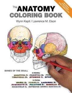 B Pp Stylemargin0px Stylemargin0pxFor More Than 35 Years BThe Anatomy Coloring Book Has Been The 1 Best Selling Human
