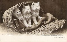 Three kittens At home Thursday   old by sharonfostervintage, $3.25