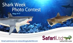 Enter to #win three replicas of your choice in our Shark Week Facebook Photo Contest! Click the pin for full details :)