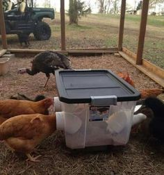 Chicken Coop - DIY No Waste Chicken Feeder Bin - easy to make and helps you save your feed. Building a chicken coop does not have to be tricky nor does it have to set you back a ton of scratch. Chicken Coop On Wheels, Walk In Chicken Coop, Chicken Coop Pallets, Mobile Chicken Coop, Chicken Coup, Portable Chicken Coop, Chicken Feeders, Backyard Chicken Coops, Building A Chicken Coop