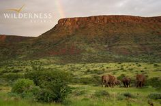 Damaraland Camp - In this arid environment the ceaseless processes of life revolve around harnessing the near non-existent water in the most economical way possible. Desert adaptation is the miracle of the surprisingly rich diversity of fauna and flora surviving here. #Safari #Africa #Namibia #WildernessSafaris
