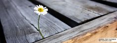 Flowers - Facebook Covers | Facebook Profile Covers