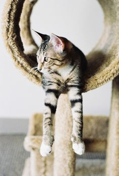 hitler katze cats katzen pinterest videos bilder und suche. Black Bedroom Furniture Sets. Home Design Ideas