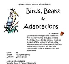 Migratory Birds, In A Nutshell, Learning Tools, Investigations, Conservation, Habitats, Wildlife, Student, Education