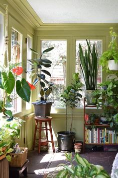 Natasha and the Plant-Filled Sunroom — House Tour   Apartment Therapy