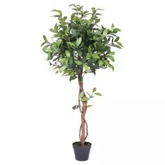 Vickerman Artificial Camellia Tree, Comes In A Black Plastic Insertable Pot, Making This Plant Easy To Place In The Decorative Container Of Your C. Fake Plants, Indoor Plants, Camelia Tree, Black Planters, Fiddle Leaf Fig Tree, Potted Trees, Artificial Tree, Nature Decor, Camellia
