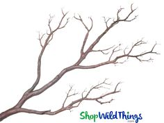 Buy our beautiful Artificial Branches to fill your floral designs and centerpieces. We have Manzanita Branches, Tree Branches and Flower Branches. Vase With Branches, Manzanita Branches, Vase With Lights, Tree Branches, Cherry Blossom Art, Blossom Trees, Door Beads, Rocky River, Flower Branch