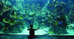 The Deep Aquarium - Hull, Yorkshire Hull England, Yorkshire England, The Deep Hull, Welcome To Yorkshire, Kingston Upon Hull, Sultanate Of Oman, Coral Walls, Holiday Day, Marine Aquarium