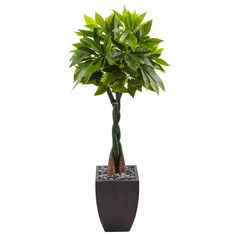 This beautiful faux Money tree is nearly indistinguishable from the real thing. Glossy green leaves are made from the highest quality materials, and the braided trunk is crafted from three individual pieces. This is a perfect accent to any decor, and comes with a solid black planter topped with smooth river rocks.