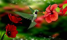 humming birds wallpapers and backgrounds | Tagged with: Hummingbird Hummingbird HD Wallpaper Hummingbird ...