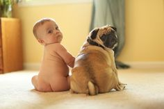 © Photographs by Megan, Happy World Pug Day!