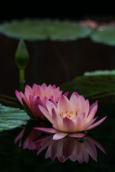 Reflections, Chicago Botanic Garden