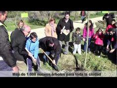El Gobierno municipal del alcalde Emiliano García-Page ha plantado ya más de 1.000 nuevos árboles en la actual legislatura, dentro de su compromiso de aumentar este tipo de actuaciones en toda la ciudad de Toledo y concienciar a los ciudadanos en materia medioambiental.