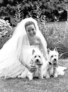 i just about DIED! I want a westie soo bad AND for it to be in my wedding!!!