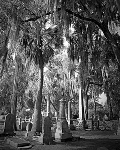For good luck carry the left hind foot of a graveyard rabbit killed by a cross eyed man at midnight. Southern Gothic  from Fleeting Charms of Earth Farewell