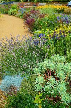 Dry garden with Lavandula, Euphorbia. Ness Botanic Garden. photo: Karl Gercens.