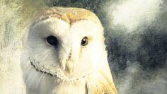 paul christiaan bos uilen - Google zoeken
