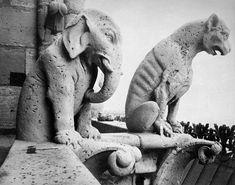 Notre Dame: Gargoyles Photograph  - Notre Dame: Gargoyles Fine Art Print