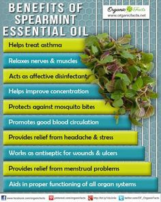 Health Benefits of Spearmint Essential Oil: The health benefits of Spearmint Essential Oil can be attributed to its properties as an antiseptic, antispasmodic, carminative, cephalic, emenagogue, insecticide, restorative and stimulant substance  ORGANIC World - Community - Google+