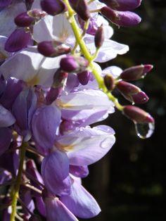 In questo momento la natura è una esplosione di colori ed il nostro giardino è invaso dalle fioriture.