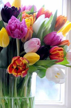 An array of Spring tulips. Easter Flowers, Tulips Flowers, My Flower, Daffodils, Fresh Flowers, Spring Flowers, Planting Flowers, Beautiful Flowers, Sunflowers