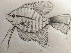 Gourami fish Welcome to Arts corner! Here you will have an opportunity to explore your imagination using art. Express yourself with colours and sketches. In this month we will learn how to draw a Gourami fish.